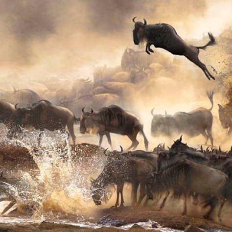 Stunning Pictures: The Winners Of The Sony World Photography Contest